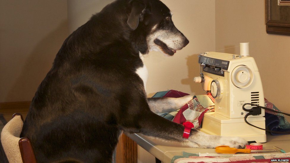 dog sewing