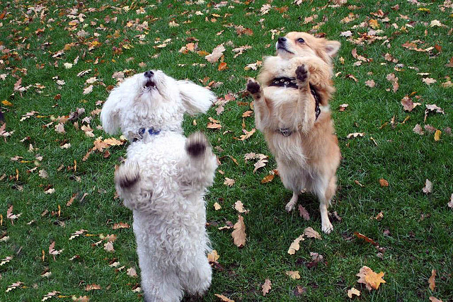 dogs dancing