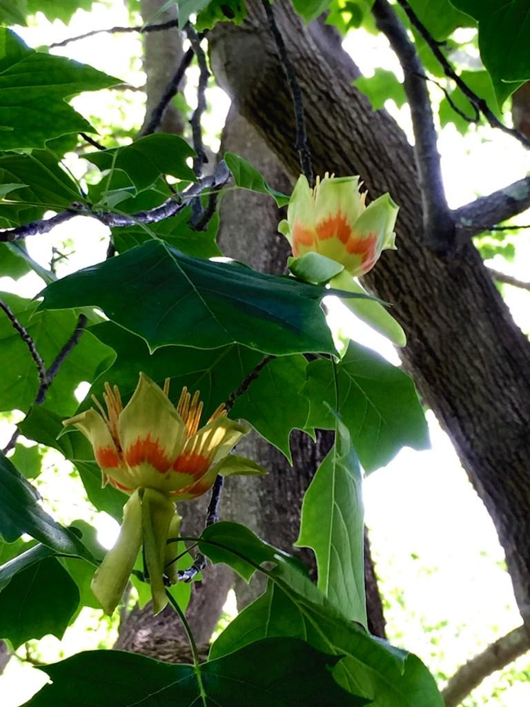 Sonnenhof garden Newport RI