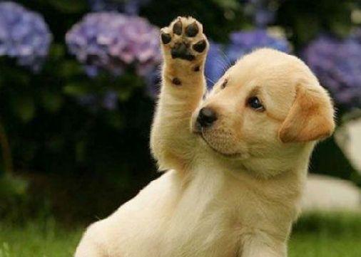 dog goodbye