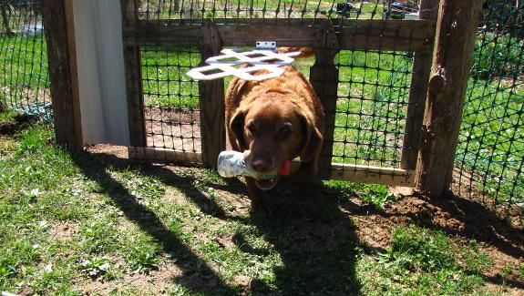dog with lattice door
