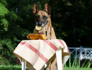 dog tablecloth