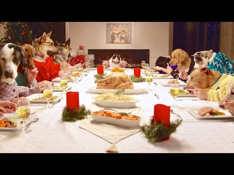 dogs at dinner