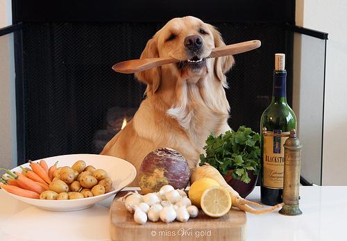 dog cooking