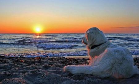 dog sunset12