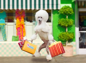 dog-with-shopping-bags-300x223