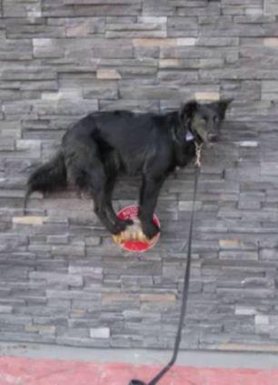 dog on rock wall