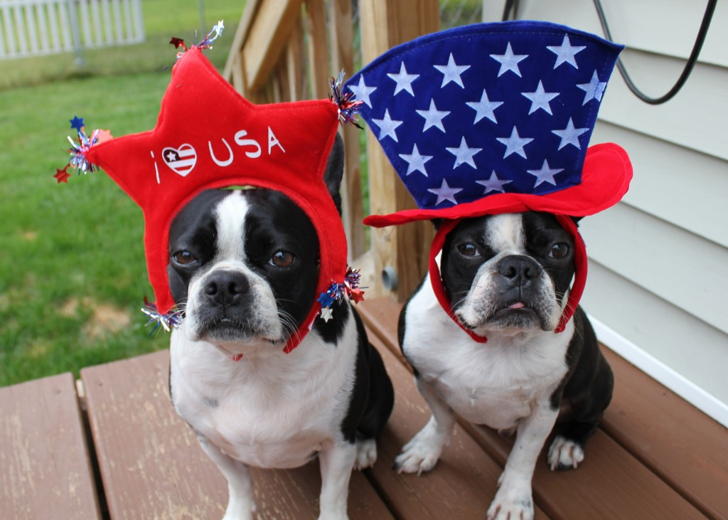 red white blue dogs