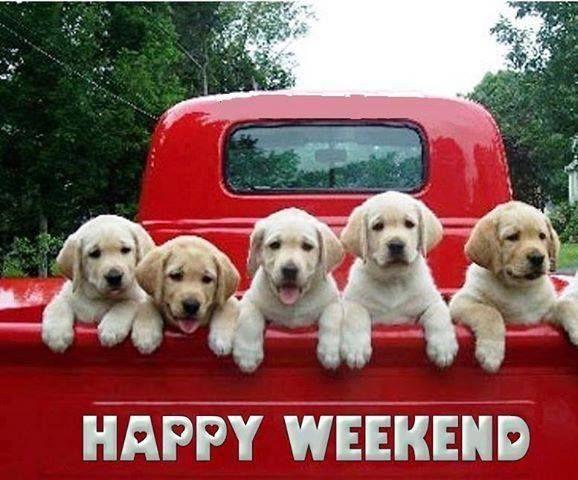 weekend dogs