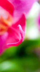 orchid blurs (2 of 6)