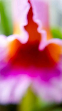 orchid blurs (3 of 6)