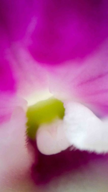 orchid blurs (5 of 6)