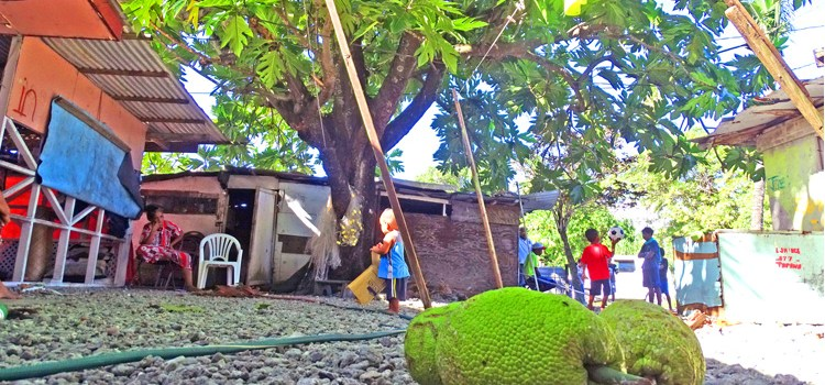 Batkan man electrocuted in 'ma' tree