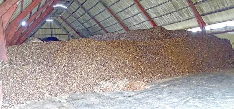 Bumper copra crop hits Tobolar