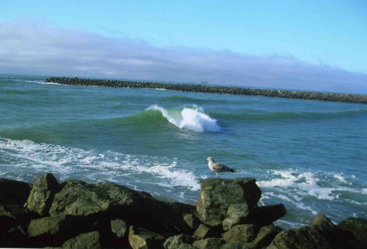 beach-and-gull2.jpg