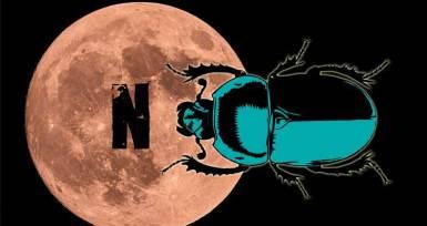 Bok Böcekleri ve Hayat