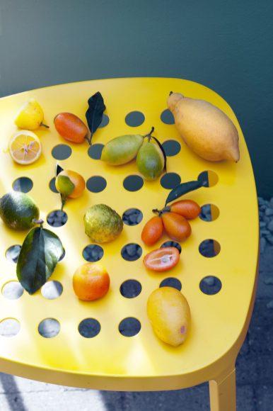 citrusboompje