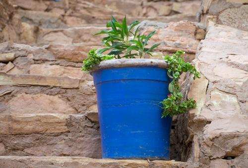 blauw geverfde boempot