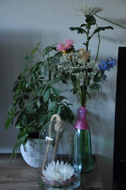 chrysanten thuis