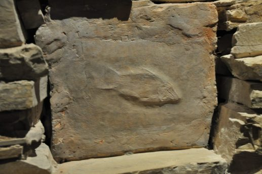 montblanc fossiel