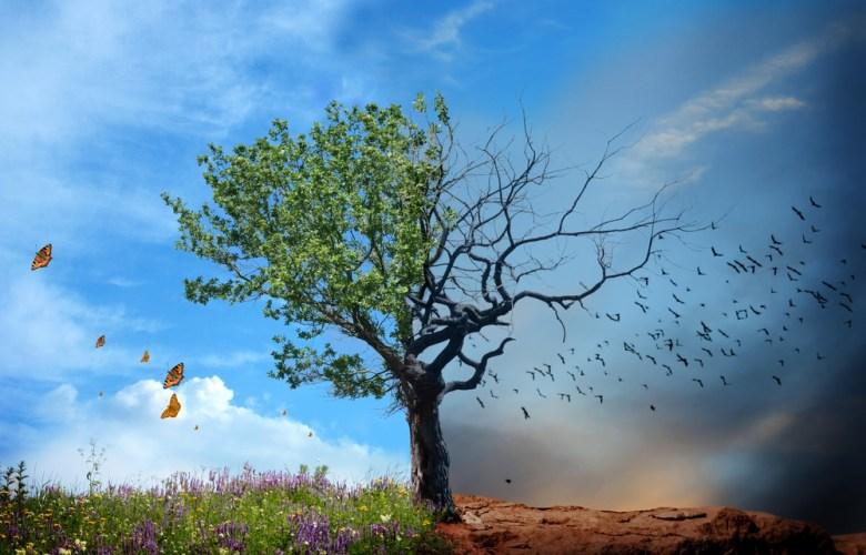 boom nieuw en dood