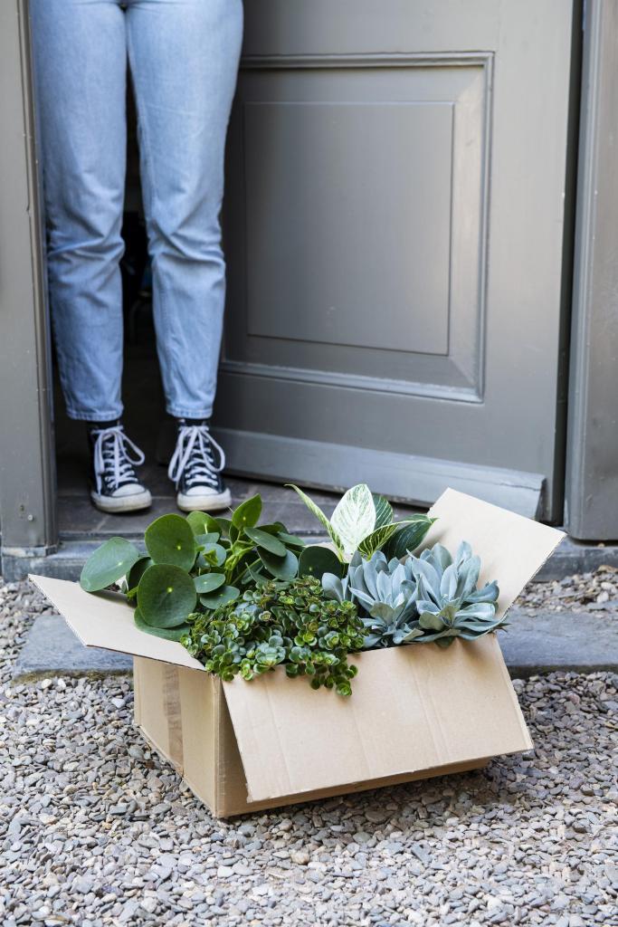 plantjes thuiswerkbox