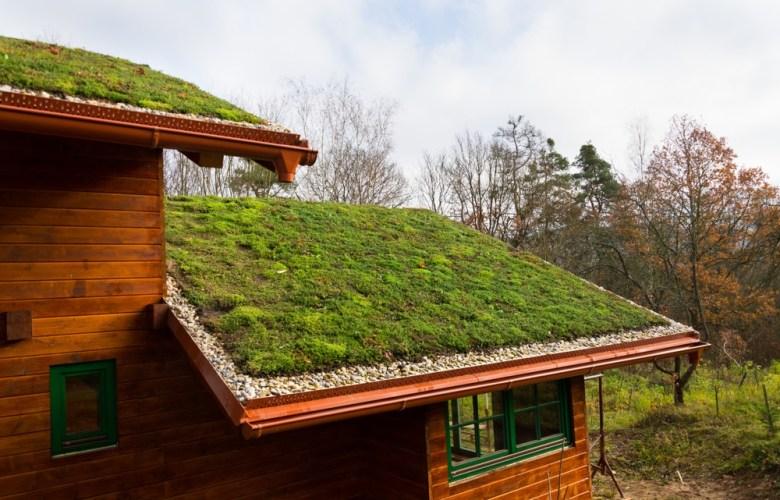 groene dakbedekking