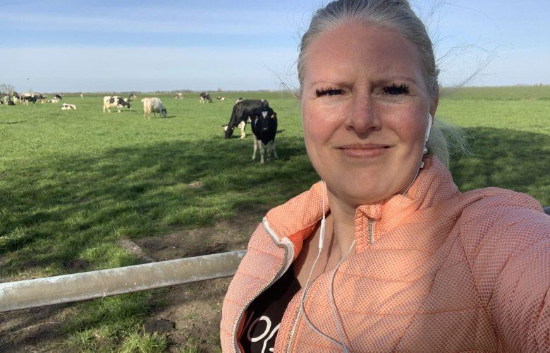 wandelen koe