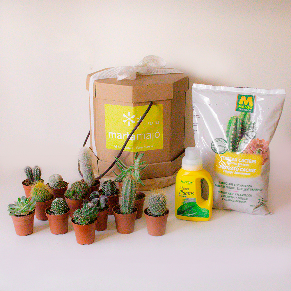 cactus variados plantas floristeria sant feliu de llobregat MartaMajo flors barcelona