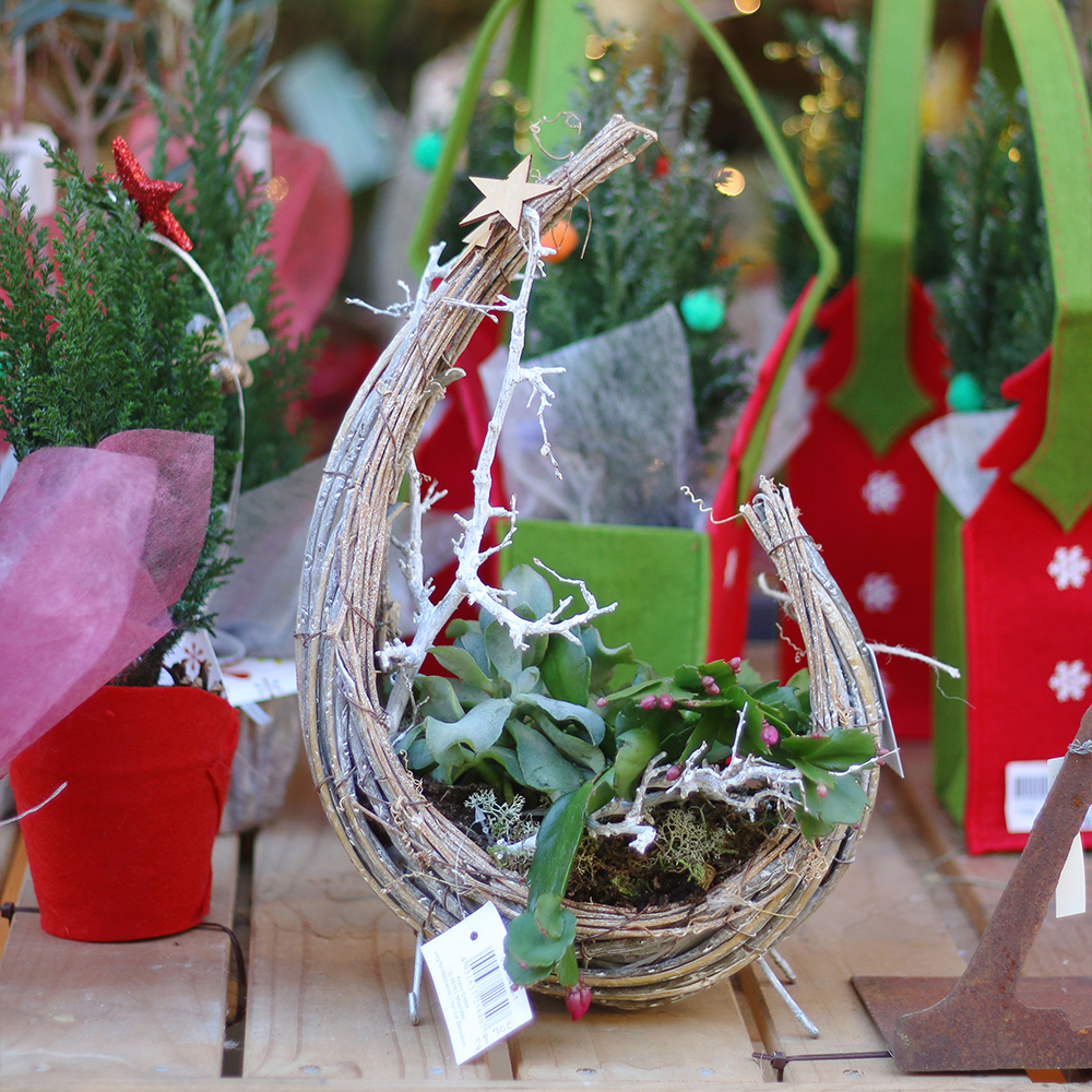 objecto decorativo cactus crassulas luna y estrellas arte floral dissenyo floristeria martamajo flors plantas barcelona sant feliu de llobregat