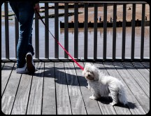 2016 Hastings Dog On Pier small