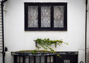 2016 Jack in the Green Simple Bough Over Black Bay Window small