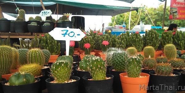 Pattaya_market_flowers_8
