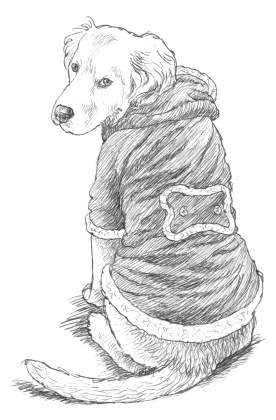 Hond in hesje
