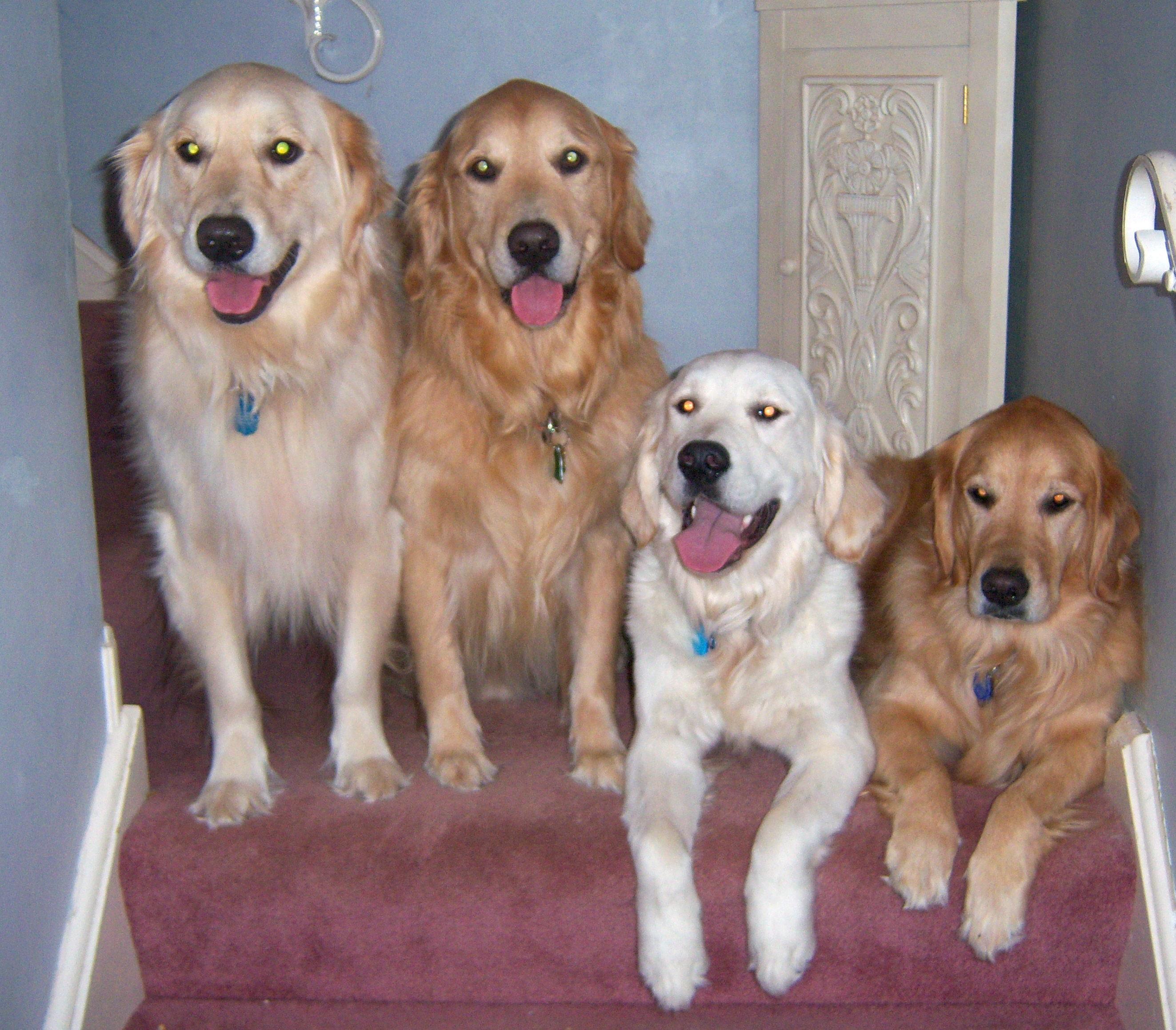 fourdogs_adjusted