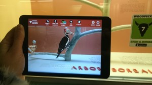 Photograph of AR app being used with woodpecker animation