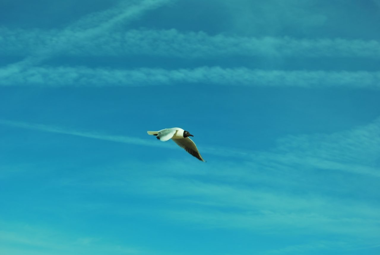 libertar para volar martha lovera