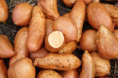Orange Sweet Potato Seeds
