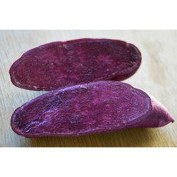 buy sweet potato starts online