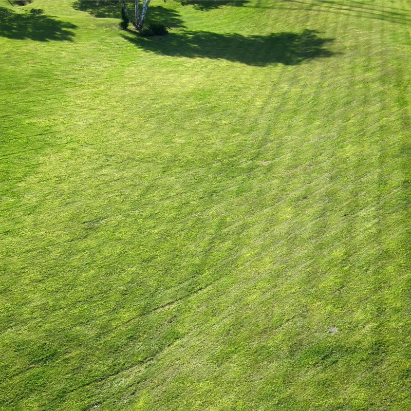 Ein gründlich kreuz und quer gemähter Rasen