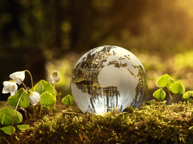 glass ball with continents engraved laying on a mossy flowery bed in woods