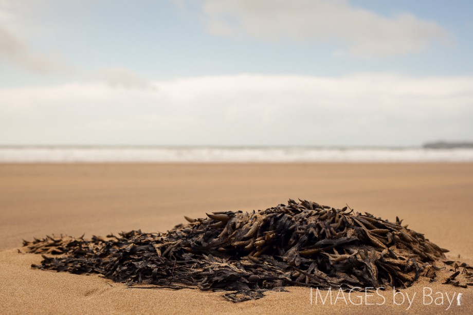 image of seaweed on the beach