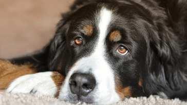 Iberanimal IP Emergencia en las protectoras: no hay fondos para alimentar a miles de perros y gatos acogidos