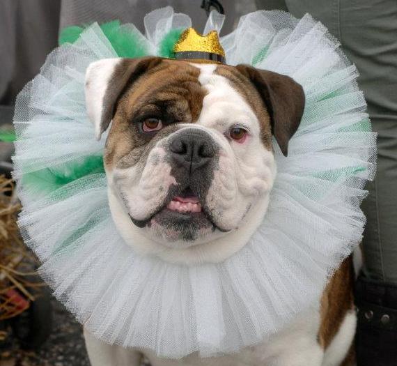 dog-contest