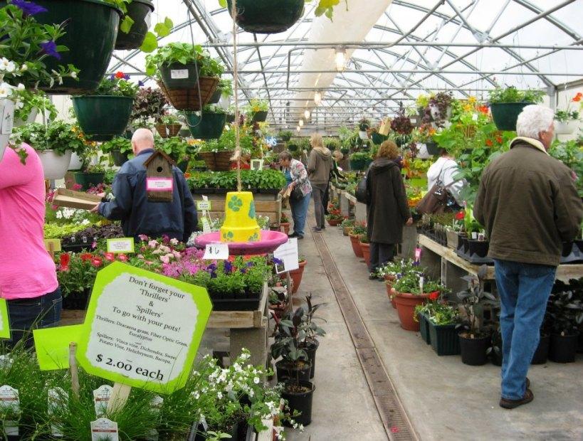 Ozanam plants