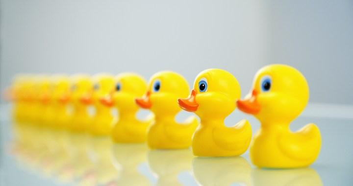 Red Bridge YMCA: Ducks, PB&J, and No New Management