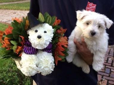Teefey Flowers dog