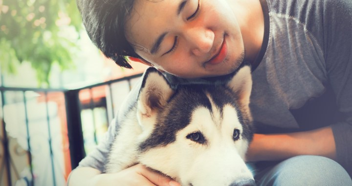 Pet Cremation Services understands pet was a beloved family member