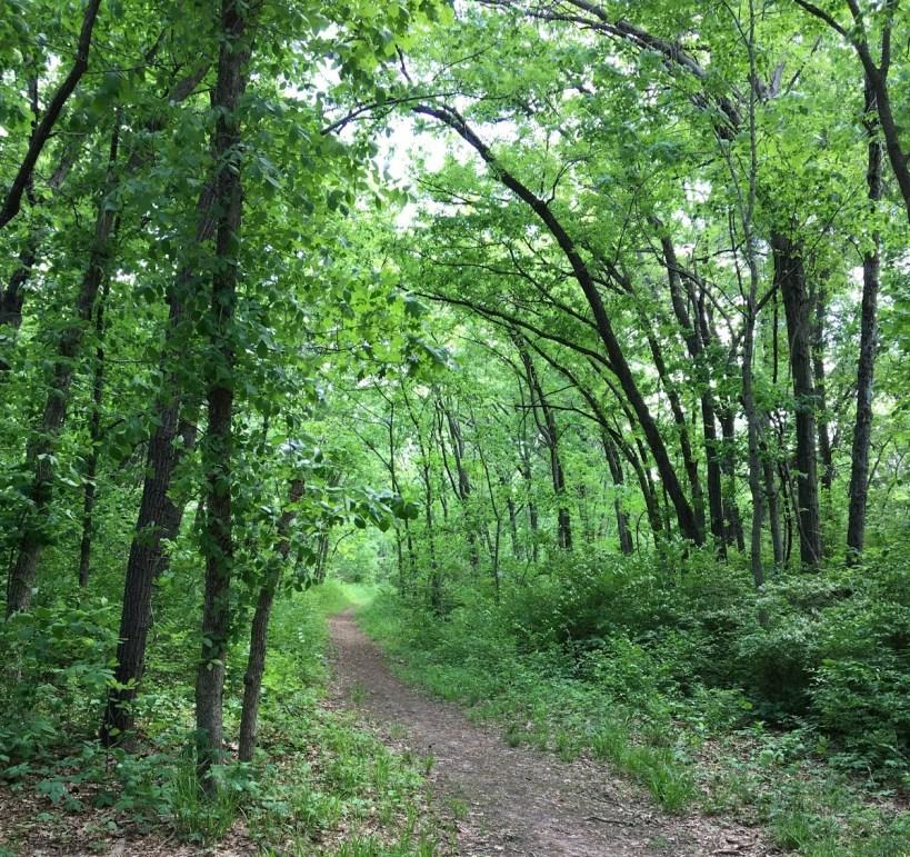 Blue River trail path