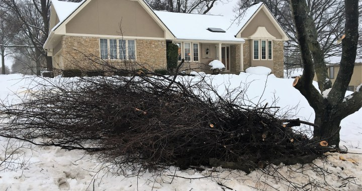 City initiates special curbside pickup for fallen branches